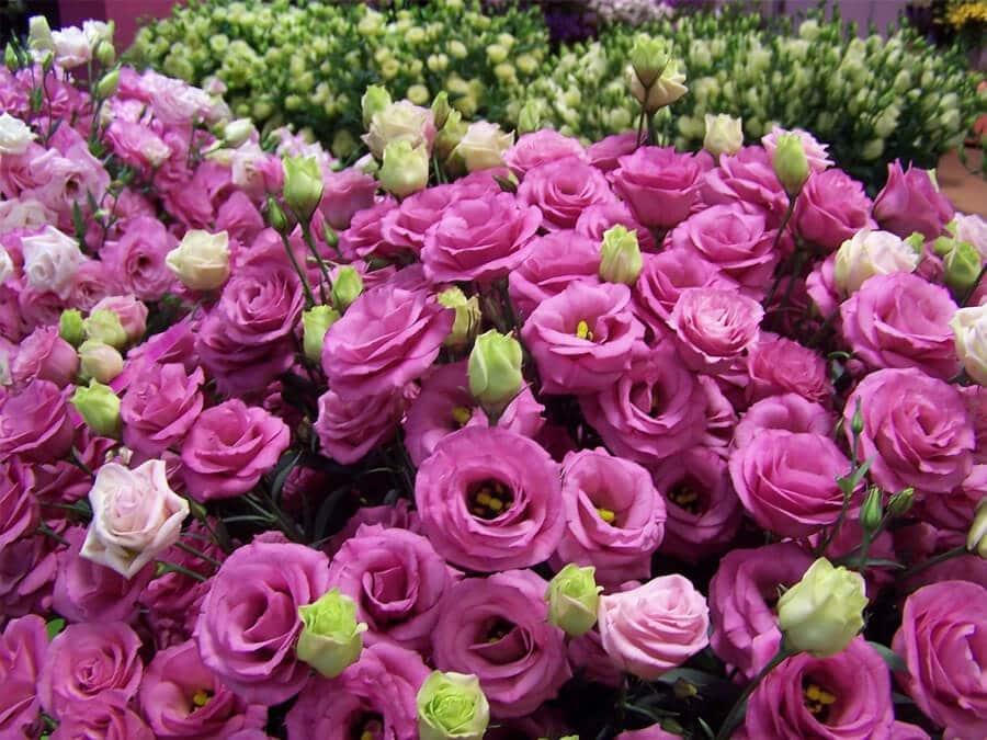 Trang trí Tết trong nhà bằng hoa