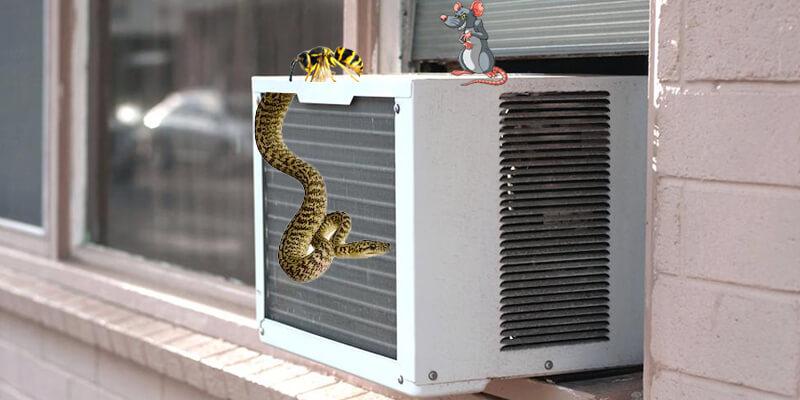 Côn trùng có thể là nguyên nhân làm máy lạnh có mùi hôi