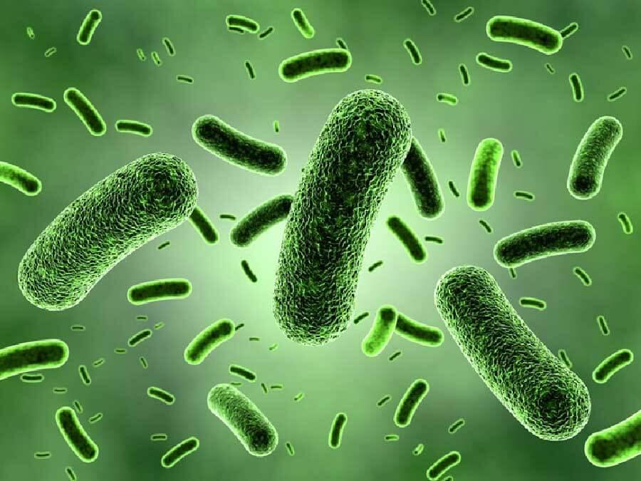 vi khuẩn khiến máy lạnh có mùi hôi