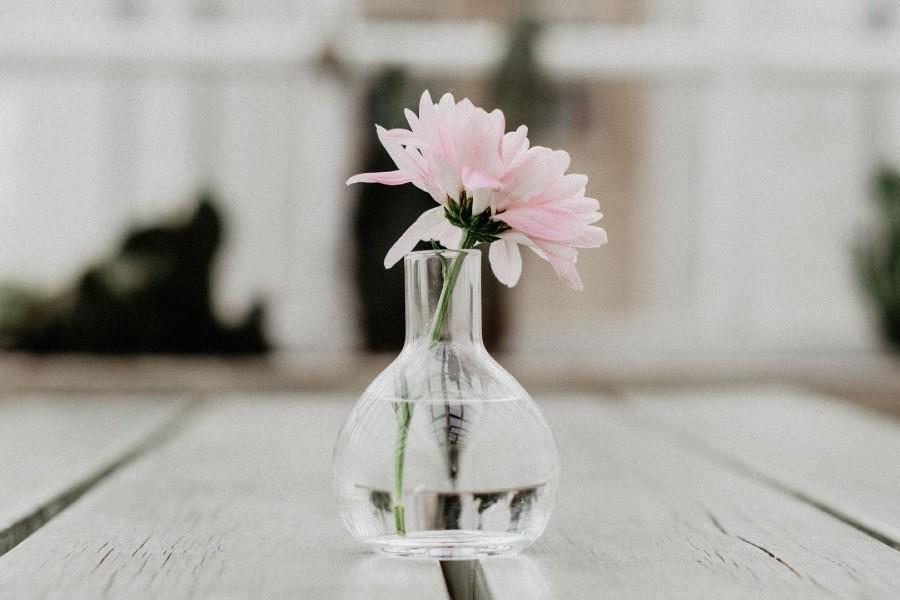 cành hoa không lá giúp cây tươi hơn