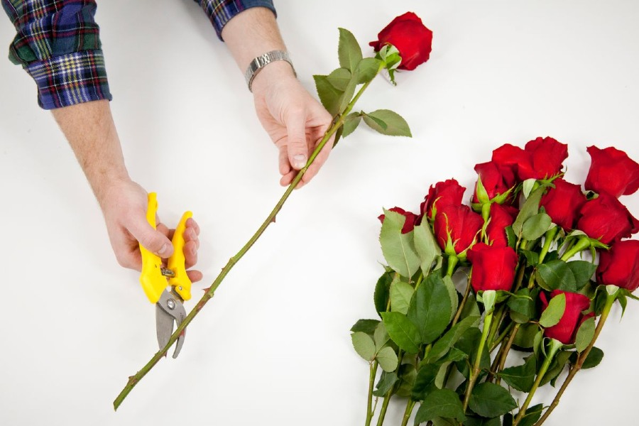 cắt hoa đúng cách