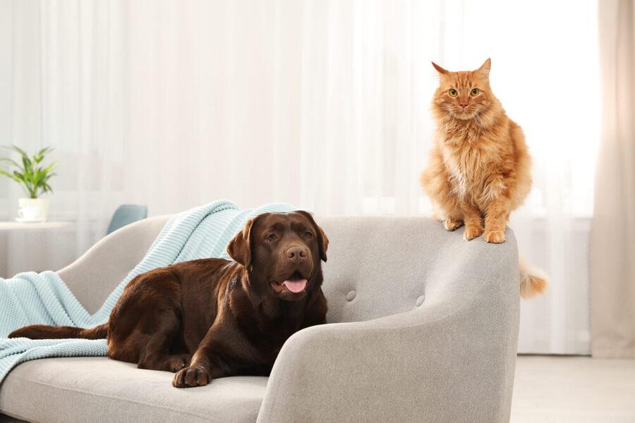 chó mèo nằm trên sofa