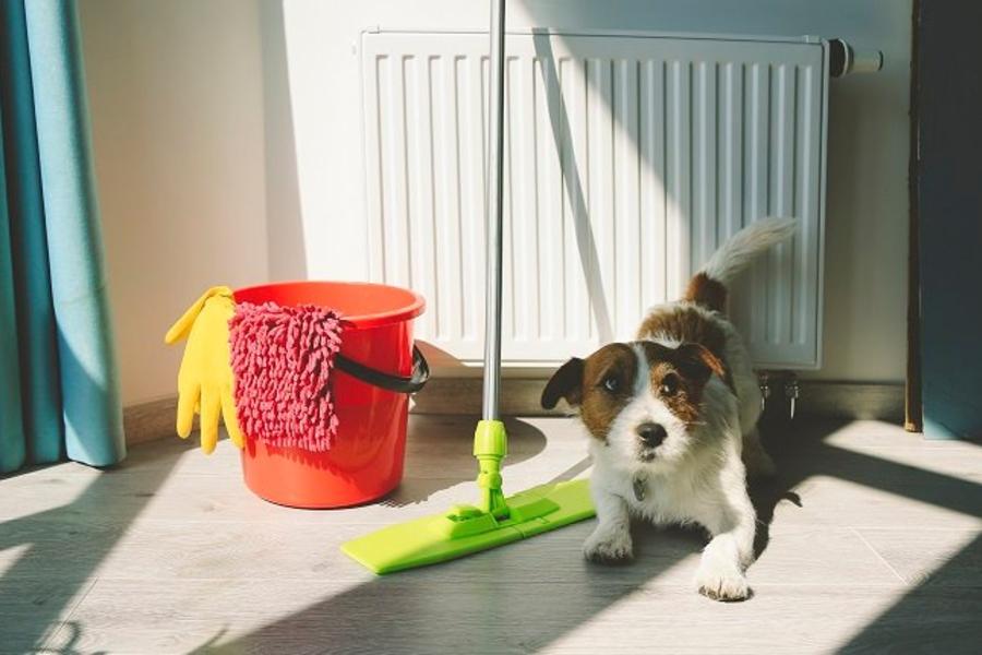 dọn dẹp nơi nằm cho chó cưng