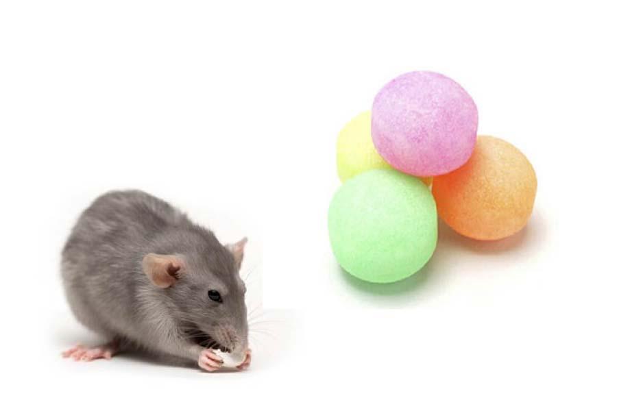dùng long não đuổi chuột