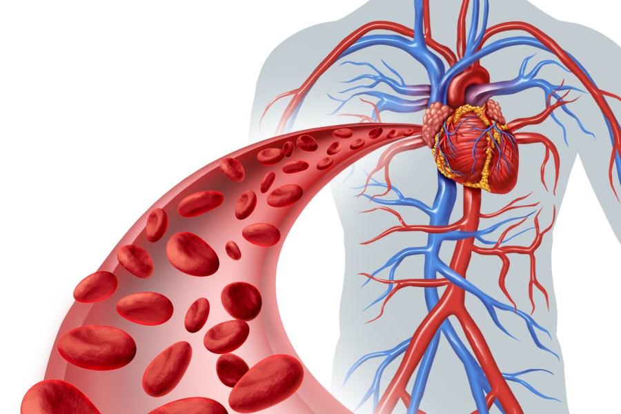 tác hại của chất tẩy rửa làm tổn thương mạch máu