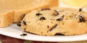 đuổi ruồi đậu trong nhà