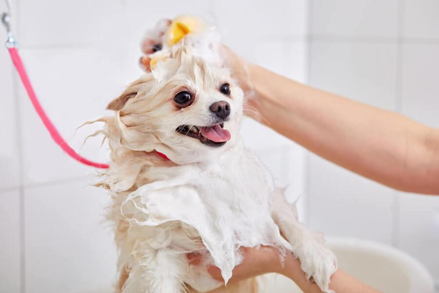 tắm cho chó mèo để khử mùi hôi