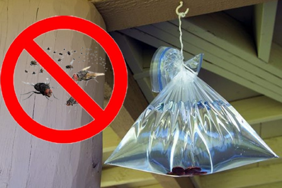 Túi đựng nước giúp đuổi ruồi