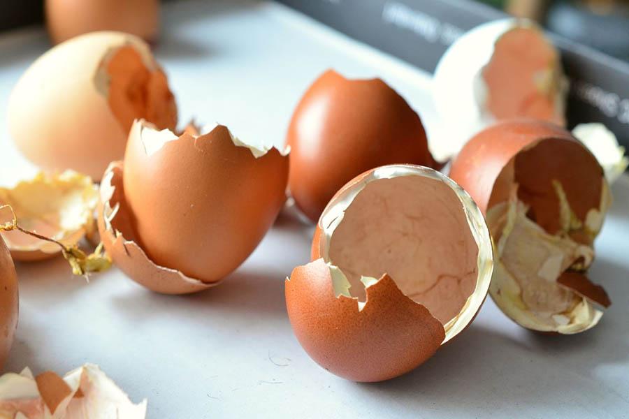 Vỏ trứng có nhiều lợi ích