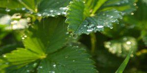 Cách giữ nước cho cây khi đi xa