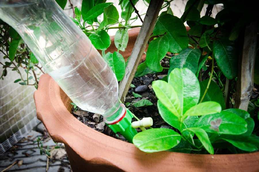 Làm hệ thống tưới cây bằng chai nước