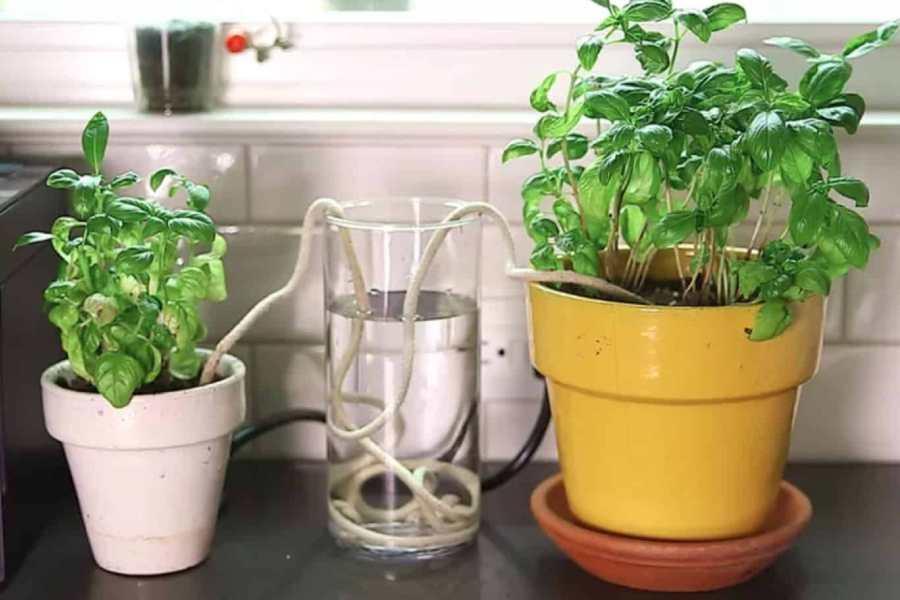 Làm hệ thống tưới nước nhỏ giọt bằng dây và chai nước
