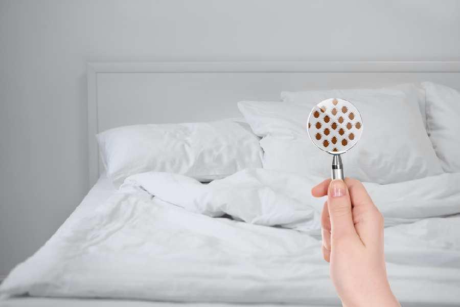 Nguyên nhân gây ra mùi hôi và vi khuẩn trong phòng ngủ