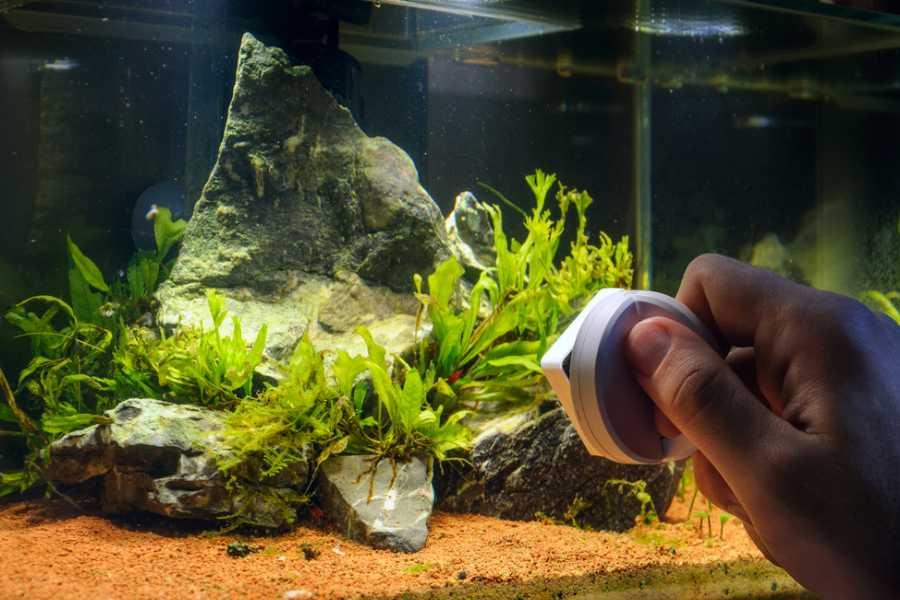 Sử dụng nam châm lau chùi kính bể cá