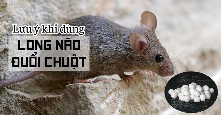 Lưu ý khi dùng long não đuổi chuột