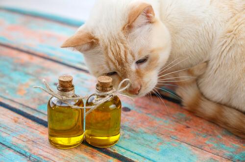 Tinh dầu khử mùi chó mèo