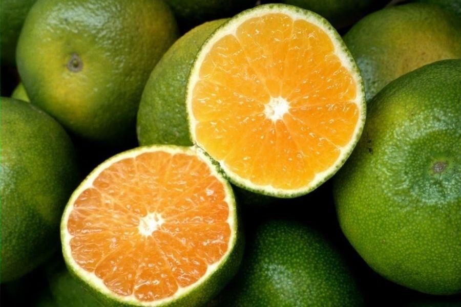 cách chọn cam sành ngon ngọt nhiều nước dựa màu sắc
