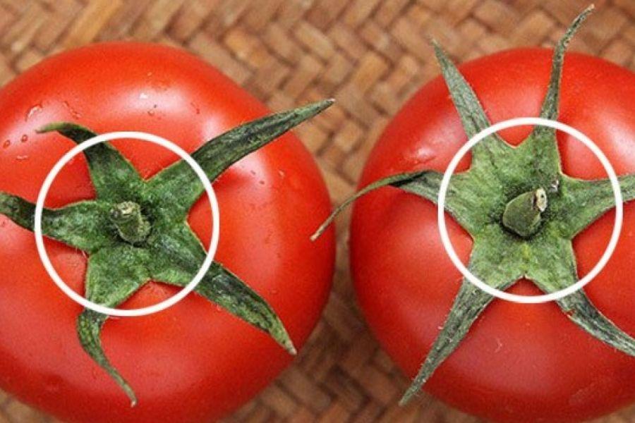 cuống quả cà chua tươi ngon