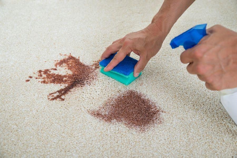 vệ sinh vết bẩn trên thảm ngay lập tức