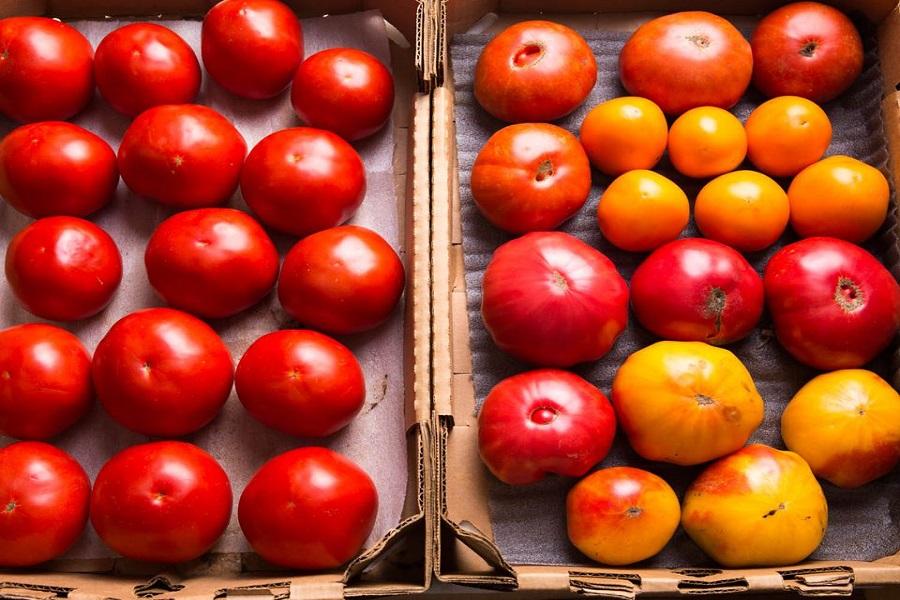 Cà chua tươi ngon có vỏ căng mọng, trái tròn đều.
