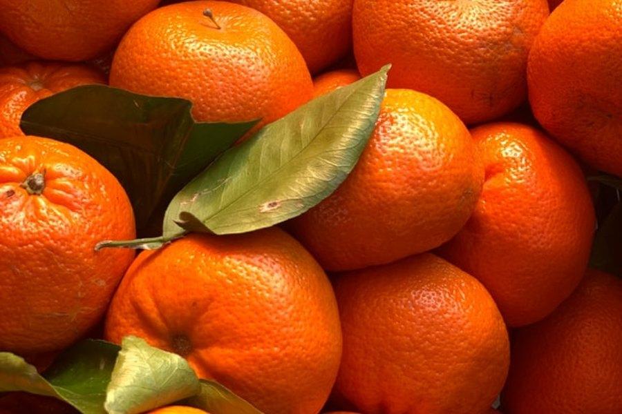 Bảo quản cam đúng cachsex giữ được độ tươi như mới hái