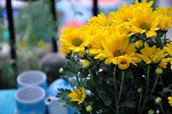 Hoa tươi luôn có trong mâm cơm cúng ngày tết.