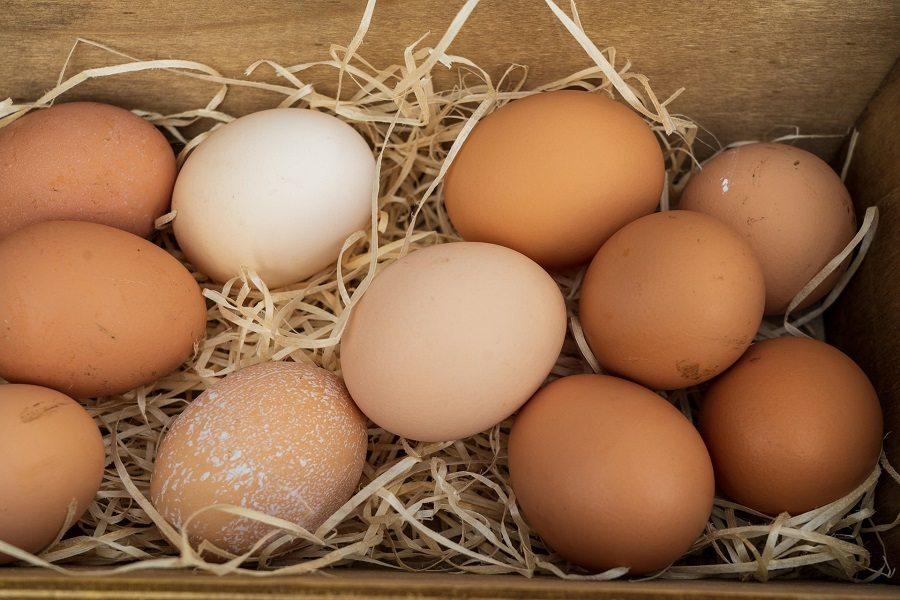 Hộp đựng trứng có lót giấy vụn