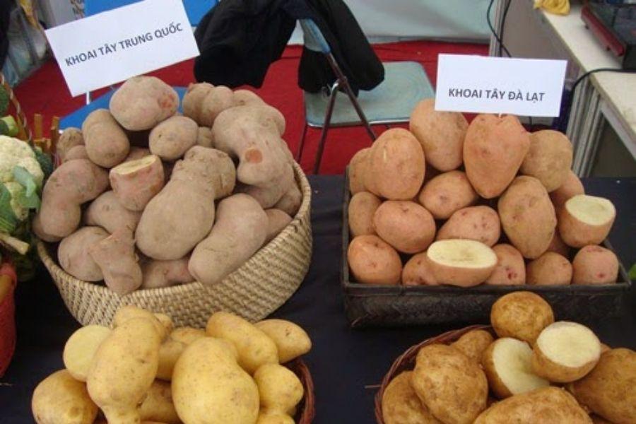 cách chọn khoai tây ngon Trung Quốc và khoai tây Đà Lạt