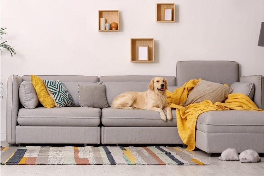 Thú cưng sử dụng ghế sofa vải