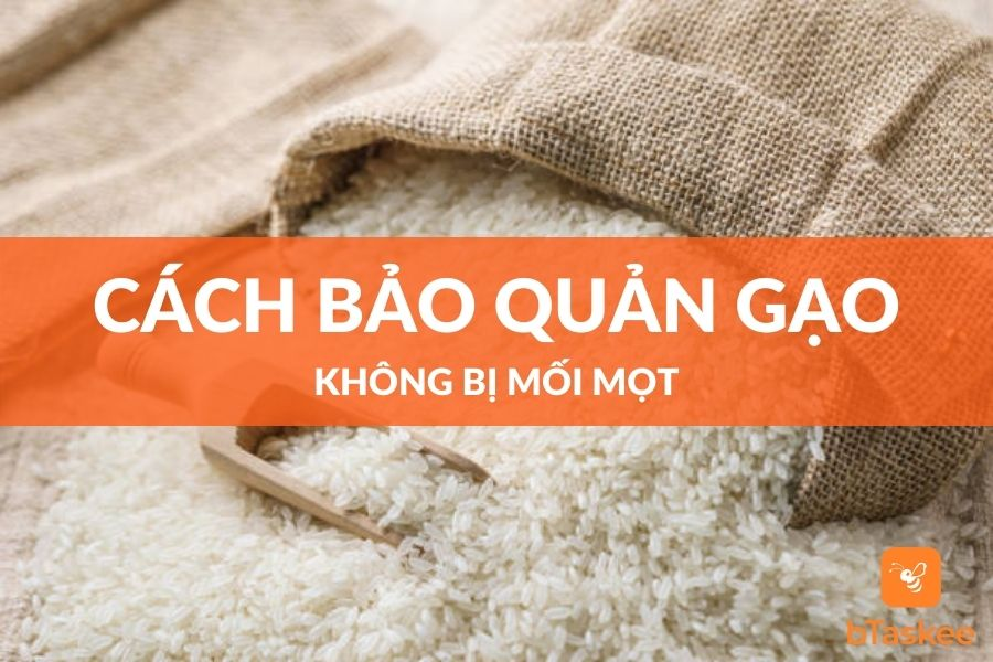 Cách bảo quản gạo không bị mối mọt