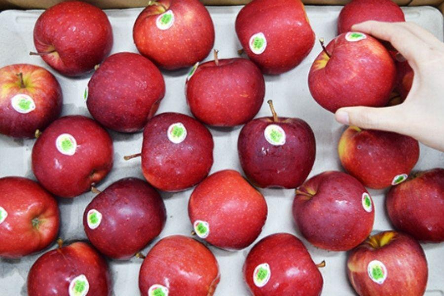 cách bảo quản táo trong thời gian dài
