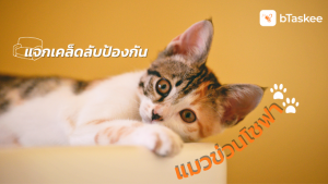 แมวข่วนโซฟา